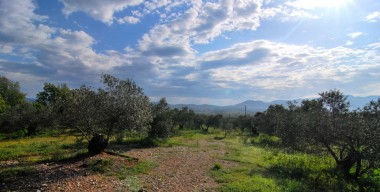 organic-olive-grove-in-garriguella-costa-brava